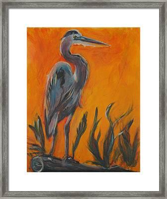 Great Blue Framed Print by Stephanie Allison