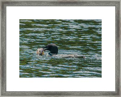 Great Catch Framed Print