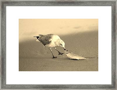 Framed Print featuring the photograph Great Catch With Fish by Cynthia Guinn