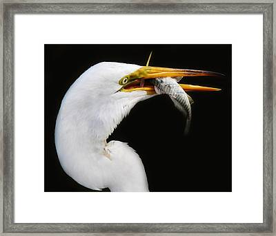Great Catch Framed Print by Paulette Thomas
