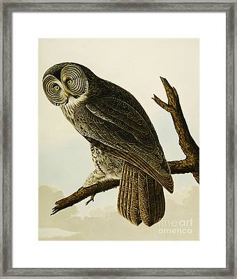 Great Cinereous Owl Framed Print by John James Audubon