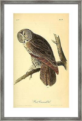 Great Cinerous Owl Framed Print