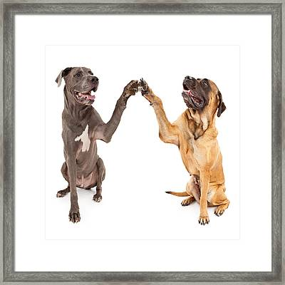 Great Dane And Mastiff Dogs Shaking Hands Framed Print by Susan Schmitz