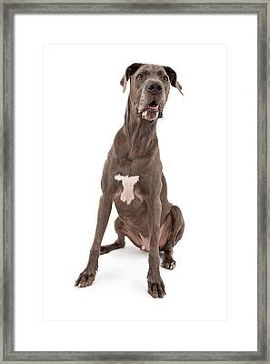 Great Dane Dog  Framed Print by Susan Schmitz