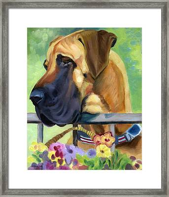 Great Dane On Balcony Framed Print by Lyn Cook