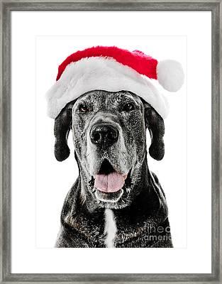 Great Dane Santa Framed Print by Jt PhotoDesign