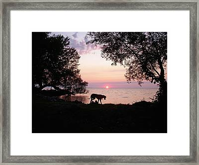 Great Dane Sunset Framed Print by Aimee L Maher Photography and Art Visit ALMGallerydotcom