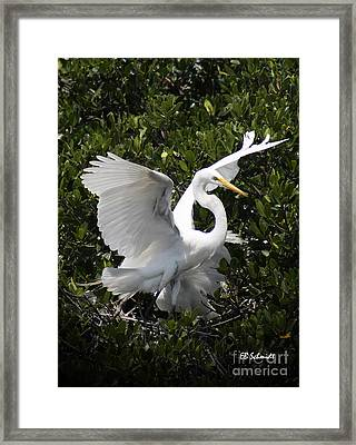 Great Egret 03 Framed Print