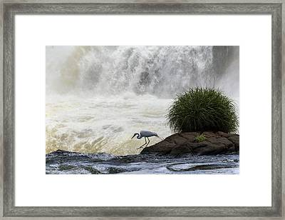 Great Egret At Iguazu Falls Framed Print by Alfred Pasieka