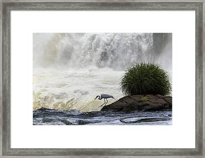 Great Egret At Iguazu Falls Framed Print by Alfred Pasieka