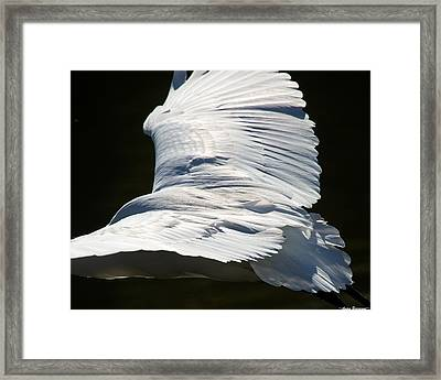 Great Egret Framed Print by Avian Resources