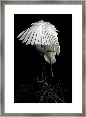 Great Egret Bowing Framed Print