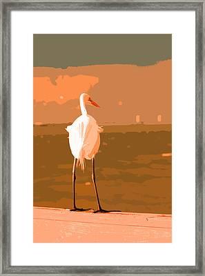 Great Egret Framed Print