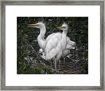 Great Egret Chicks Framed Print by Hazel Billingsley