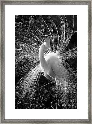 Framed Print featuring the photograph Plumes In The Wind by John F Tsumas