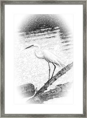 Great Egret Fishing Pencil Sketch Framed Print
