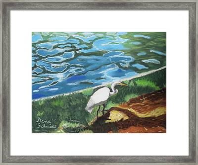 Great Egret In Florida Framed Print