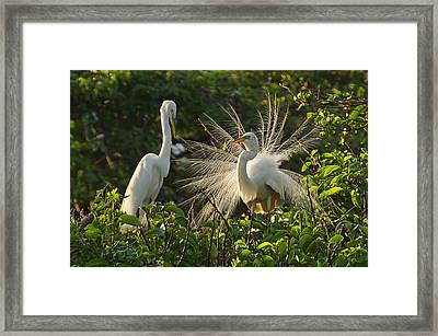 The Courtship Dance Framed Print