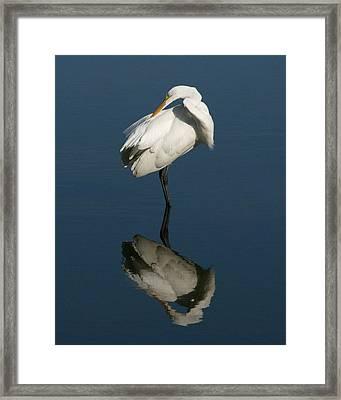 Great Egret Reflection 16x20 Framed Print by David Lynch