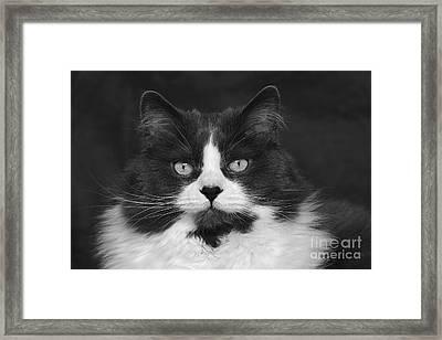 Great Gray Cat Framed Print