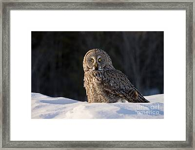 Great Gray Owl In Snow Framed Print