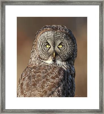 Great Gray Owl Portrait Framed Print by Daniel Behm