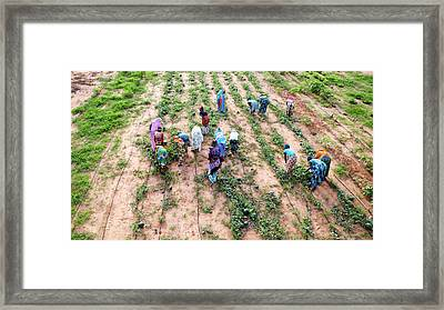Great Green Wall Farming Framed Print by Thierry Berrod, Mona Lisa Production