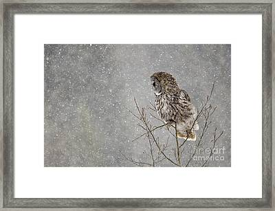 Great Grey Hunter Framed Print