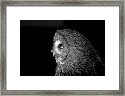 Great Grey Owl 6 Framed Print by Simon Gregory