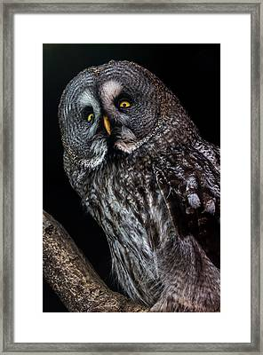 Great Grey Owl Framed Print by Gerard Pearson