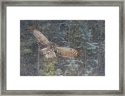 Great Grey Owl In Snowfall Framed Print