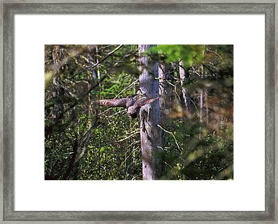 Framed Print featuring the photograph Great Grey Owl Pounces  by David Porteus