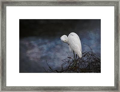Great Blue Heron Morph Framed Print by Patti Deters
