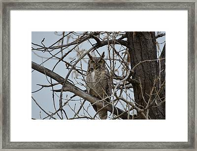 Great Horn Perched Framed Print