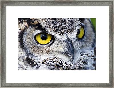 Great Horned Closeup Framed Print by Dee Cresswell
