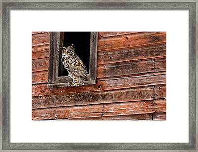 Great Horned Framed Print