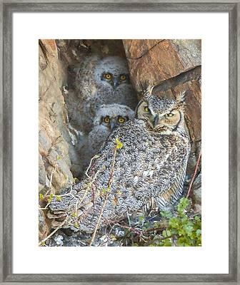 Great Horned Owl And Owlets Framed Print
