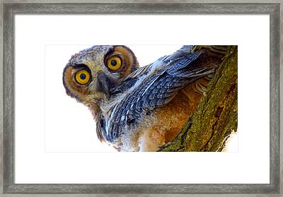 Great Horned Owl Framed Print by Catherine Natalia  Roche