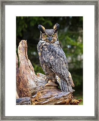Great Horned Owl Framed Print by Craig Brown