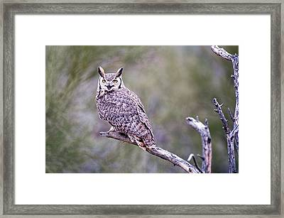 Framed Print featuring the photograph Great Horned Owl by Dan McManus