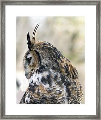 Great Horned Owl Framed Print by Dana Moyer