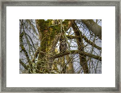 Great Horned Owl Framed Print by David Yack
