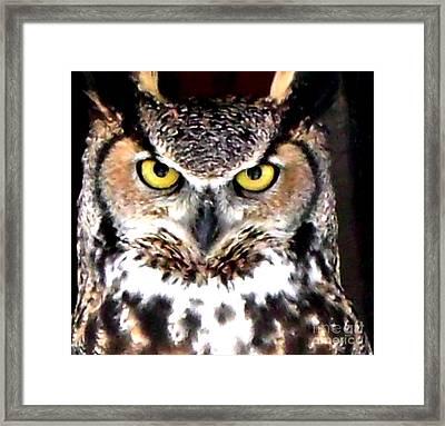 Great Horned Owl Eyes Framed Print
