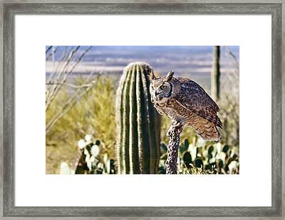 Great Horned Owl Hunting Framed Print