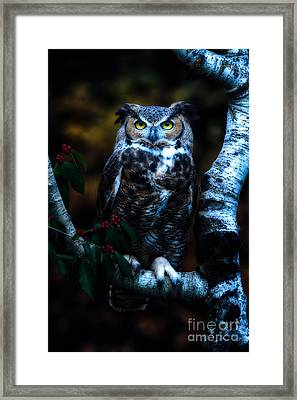Great Horned Owl II Framed Print by Todd Bielby