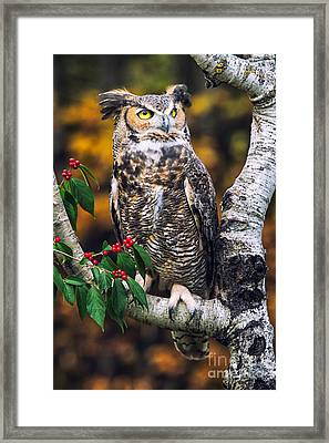 Great Horned Owl IIi Framed Print by Todd Bielby