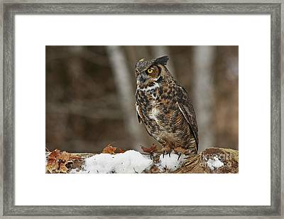 Great Horned Owl In A Snowy Winter Forest Framed Print by Inspired Nature Photography Fine Art Photography