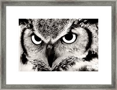 Great Horned Owl In Black And White Framed Print