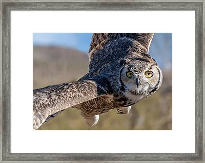Great Horned Owl In Flight - Coming At-cha Framed Print