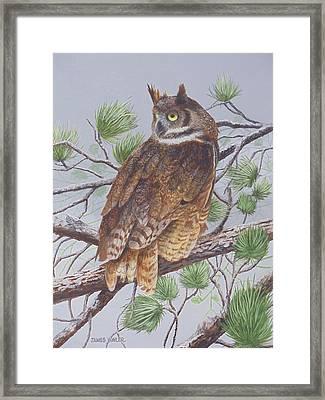 Great Horned Owl Framed Print by James Lawler